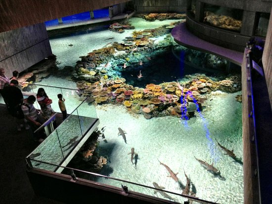 Man Made Coral Reef Picture Of National Aquarium