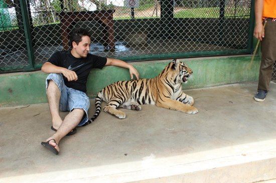 how to get to tiger kingdom phuket