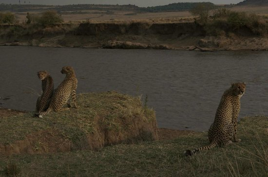 Serian: Up close & personal with the cheetahs
