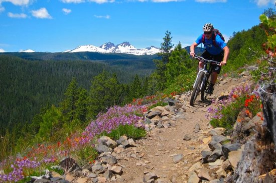 Cog Wild Mountain Bike Tours