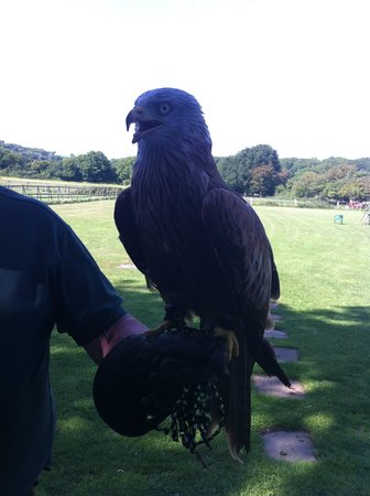 The Welsh Hawking Centre