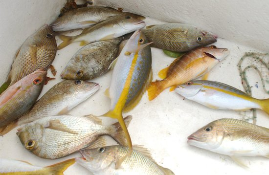 Our catch picture of hatchet caye resort placencia for Auberge la maison otis