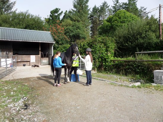 Blackwater Stables