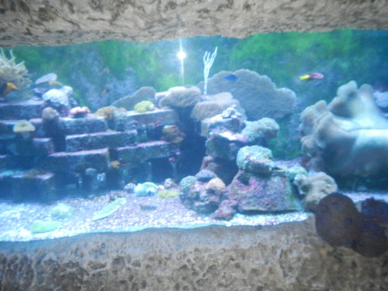 Aquarium Picture Of Museum Of Discovery And Science