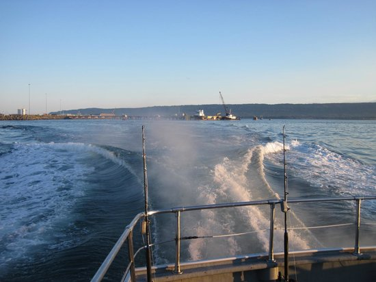 Halibut fishing picture of central charters and tours for Homer alaska halibut fishing charters