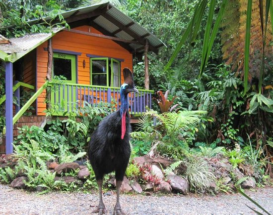 Photo of Rainforest Hideaway Cape Tribulation