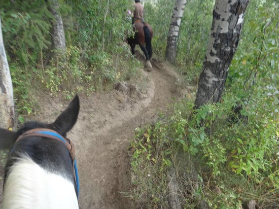 http://media-cdn.tripadvisor.com/media/photo-s/04/77/e7/ac/teton-village-trail-rides.jpg