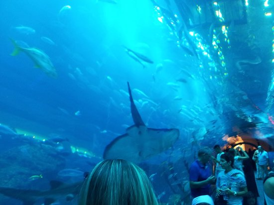 Dubai aquarium underwater zoo reviews dubai emirate of dubai