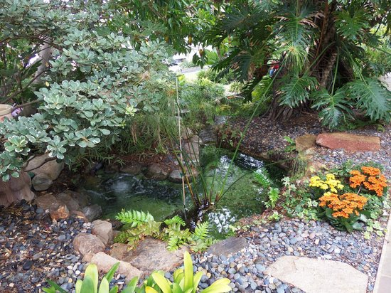 Koi Ponds With Trickling Fountains Picture Of Self