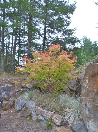Stone Wood Bed and Breakfast: Fall foliage