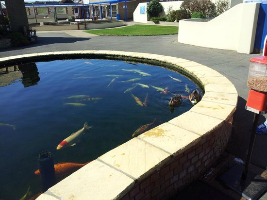 Scorpions picture of natureland seal sanctuary skegness for Koi fish in kiddie pool