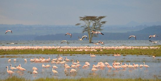 Days Lake Nakuru and Lake Naivasha