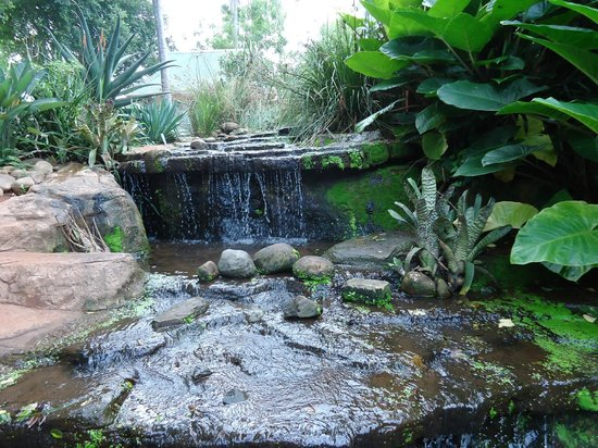 A tranquil waterfall enhances the duck enclosure picture for Koi ponds durban