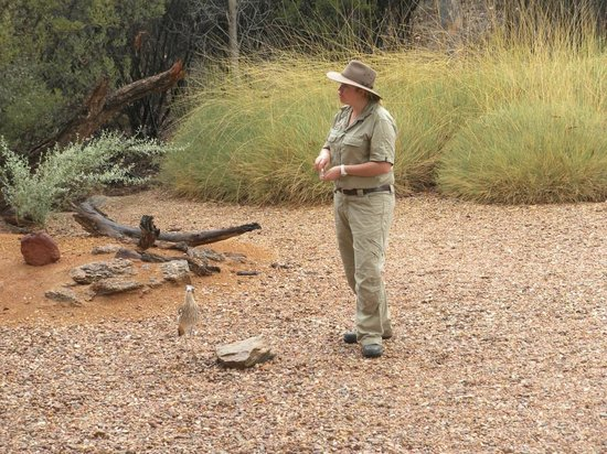 how to get to alice springs desert park