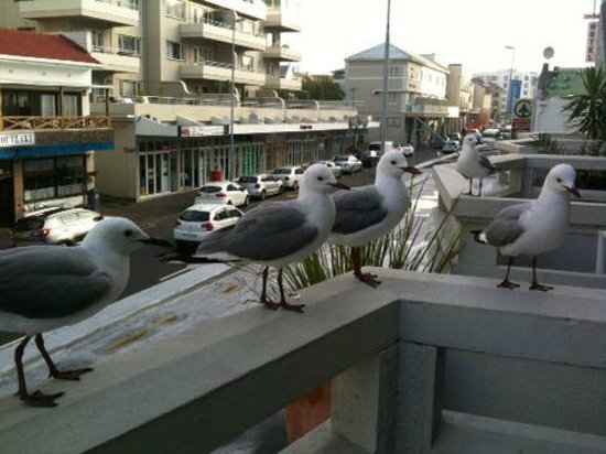 Amalfi Executive Suites: Friendly seagulls in the balcony....