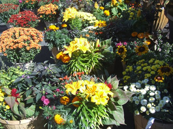 Clarion Inn Rochester: A nearby gift and flower shop/garden center is a handy stop for special-occasion gift shopping.