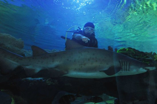 Mermaid love story underwater show - Picture of Istanbul ...