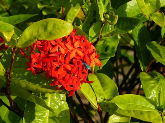 Leopard Beach Resort & Spa: See the bright blue lizard among the flowers?