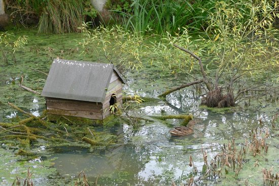 Duck pond en route from chiddingstone picture of for Garden pond kent