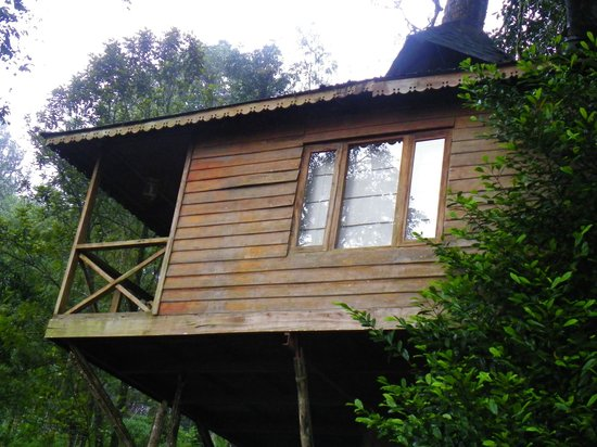 The Misty Munnar Tree House