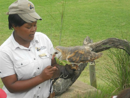 African bird of prey sanctuary pietermaritzburg