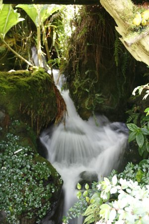 Miniature waterfall in the glass house - Picture of Singapore ...