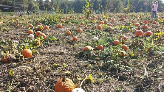 Butler's Orchard: Pumpkin Patch
