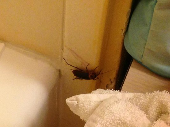 Budget Inn Hollywood: this is what we had to share the bathroom with