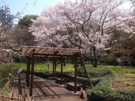 Imperial Palace East Gardens, Tokyo - Picture of The East Gardens of the Impe...