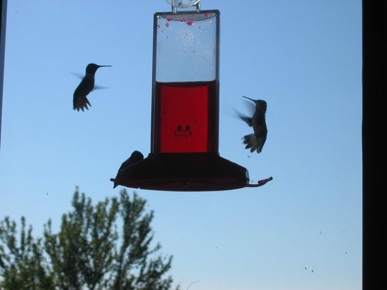 Cave in Rock State Park Lodge: The Hummingbirds