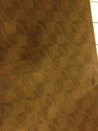 Windemere Hotel and Conference Center: Gross Carpet
