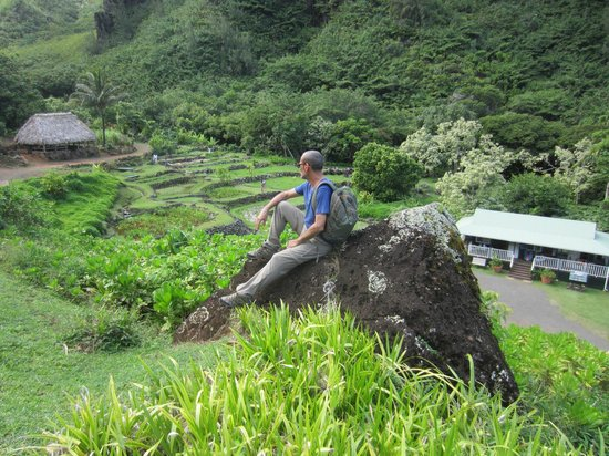 View Of The Excavated Terraced Taro Gardens Picture Of