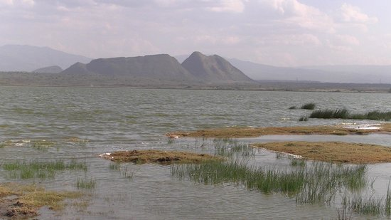 http://media-cdn.tripadvisor.com/media/photo-s/04/c4/a3/f6/lake-elementaita-with.jpg