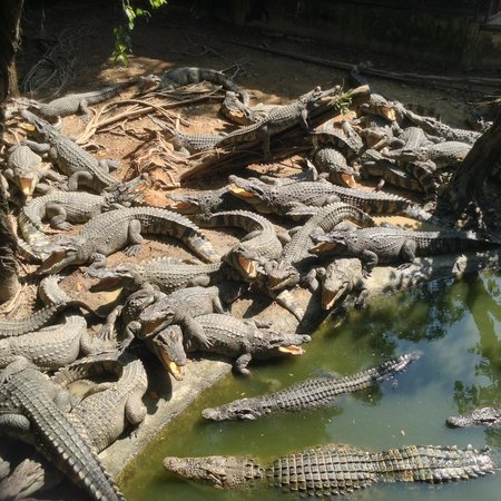 Beautiful well cared for gardens - Picture of Samutprakan Crocodile Farm and ...