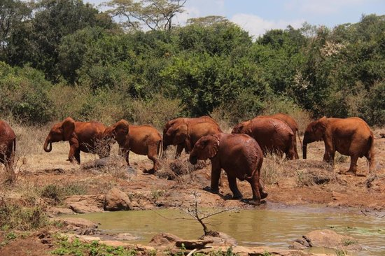 Jupiter Guest Resort Langata: At the nearby elephant orphanage