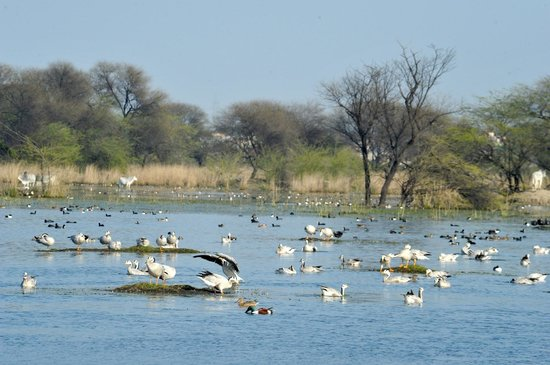 Sultanpur India  City pictures : Places to visit in Haryana: Sultanpur National Park,Sultanpur, Haryana ...