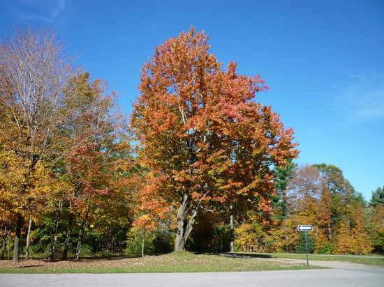 how to get to gatineau park
