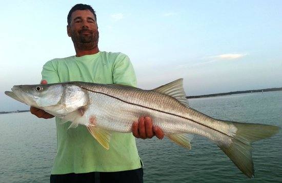 Tampa bay snook picture of tampa fishing charters tampa for Tampa florida fishing charters