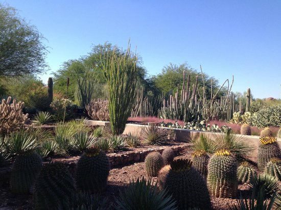 chihuly glass sculpture picture of desert botanical garden tripadvisor