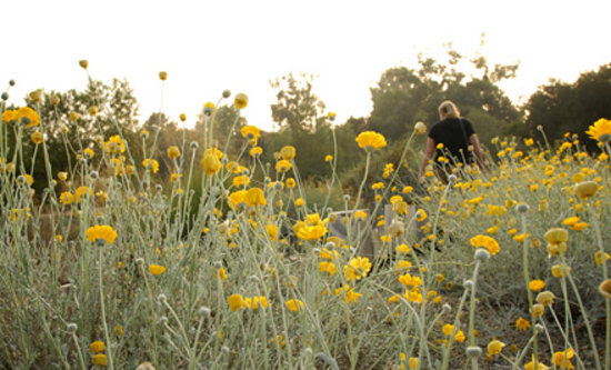 Claremont, CA: Rancho Santa Ana Botanic Garden is the largest collection of California flora