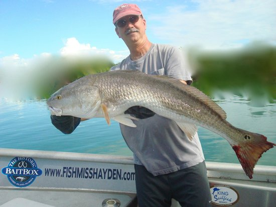 Tiger shark possibly the rarest fish in our waters for Deep sea fishing fort myers florida