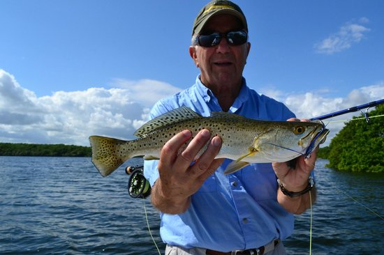 Seatrout on fly picture of miami bonefishing charters for Fly fishing miami