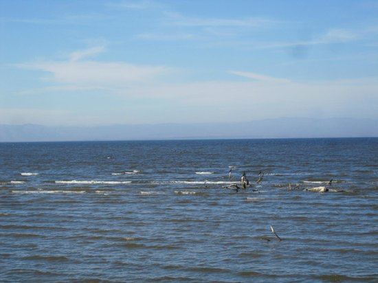 The salton sea for Salton sea fishing report