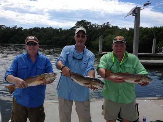 Estero bay redfish summer 2013 picture of naples inshore for Estero bay fishing report