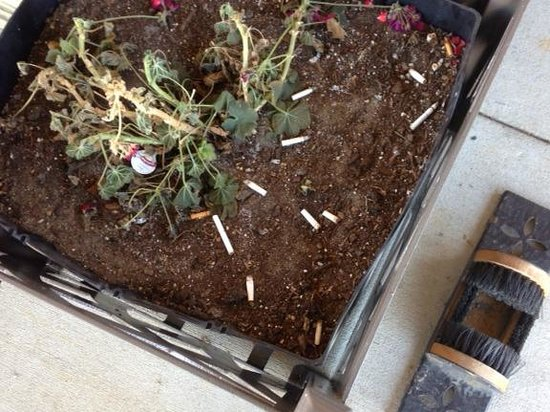 Comfort Suites Elizabethtown: Cigarette butts in planter to the right of front door.