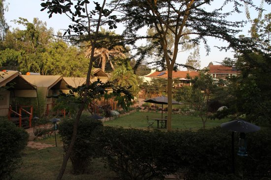 Wildebeest Eco Camp: Beautiful grounds