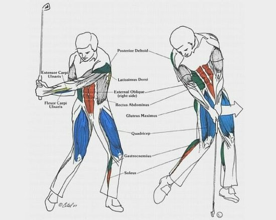 Biomechanics Of Your Body During A Golf Swing Picture Of