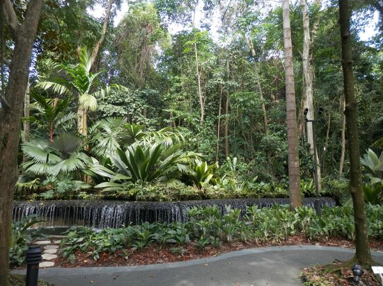 We 39 re here picture of singapore botanic gardens for Au jardin singapore botanic gardens