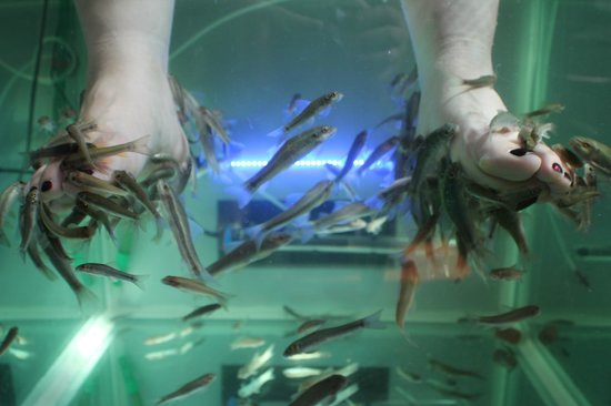 Fish pedicures in individual basins picture of alleviate for Fish spa near me