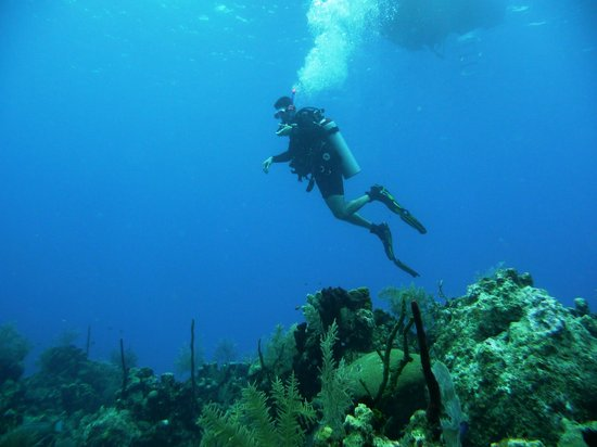 Just Hanging Out Picture Of Living The Dream Divers Seven Mile Beach